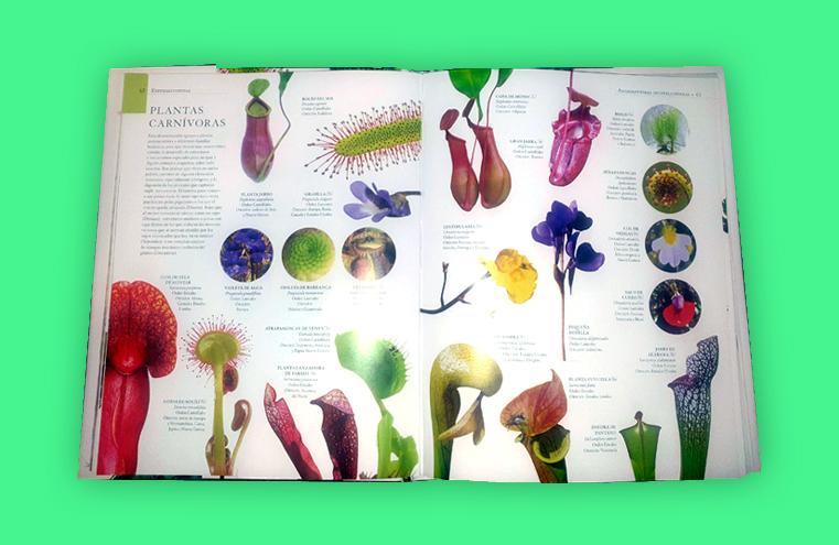 Maquetación 'Enciclopedia ilustrada del reino vegetal' (LIBSA)